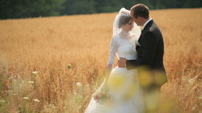 Groom embracing his beautiful bride and kisses her on yellow wheat field stock footage