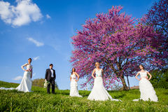 Groom with four brides Stock Image