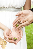Groom gives the bride the acorns Royalty Free Stock Photos