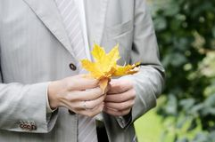 Groom holding maple leaf Stock Photos