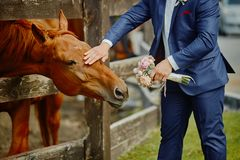 The groom, holding a wedding bouquet in hand, and a horse, who reached out to the bouquets to smell and eat.Funny wedding moment.  royalty free stock photography