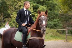 Groom on horse Royalty Free Stock Photography