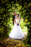 Groom hugging bride from back under tree at park Stock Image