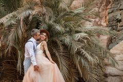 Groom hugs and kisses of bride on background of palm trees and rocks. Groom hugs and kisses of bride in long dress on background of palm trees and rocks royalty free stock photography
