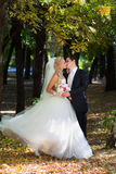 The groom kisses his bride. Royalty Free Stock Photo