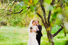 The groom is kissing the bride in an apple orchard. Standing under the branches of an apple-tree Royalty Free Stock Photos