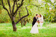 The groom is kissing the bride in an apple orchard. Standing under the branches of an apple-tree Royalty Free Stock Images