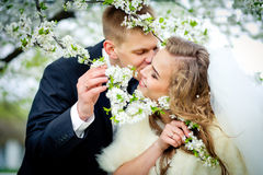 The groom is kissing the bride in branches of the blossoming che. Rry tree. Newlyweds in the wedding day Stock Photos