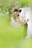 Groom kissing bride Stock Images