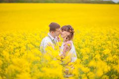 Groom kissing bride on yellow summer field Royalty Free Stock Photo