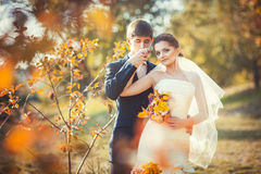 Groom kissing hand of bride. Wedding photography in autumn park where young groom kissing his hand gently bride in her wedding dress Stock Images