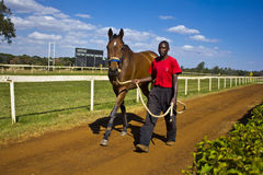 Groom with a racehorse Royalty Free Stock Photo