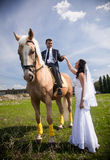 groom riding a horse giving hand to brunette bride Royalty Free Stock Image