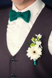 Groom's boutonniere and tie - butterfly. The groom in a brown vest with buttonhole Stock Image