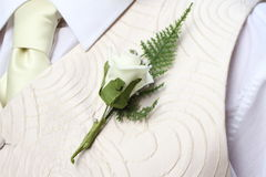 Groom's buttonhole Stock Images