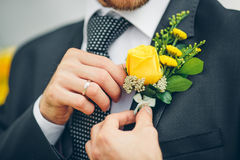 Groom's hand arranging yellow boutonniere flower on suit Royalty Free Stock Images