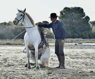 Groom shows White Camargue Horse Royalty Free Stock Photo