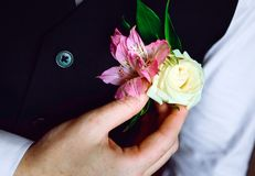 The groom straightens the buttonhole, close-up royalty free stock images