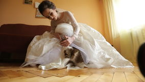 Groom stroking a cat under her dress stock video