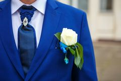 Groom in a suit holding buttonhole stock image