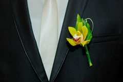Groom suite Stock Photography