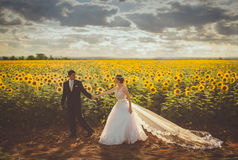Groom Wearing Black Formal Coat Holding Bride in White Bridal Gown in Yellow and Green Sunflower Field during Daytime Royalty Free Stock Photos