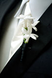 Groom with white Boutonniere Stock Image
