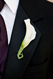 Groom with white Boutonniere Stock Photos