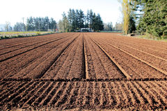 Groomed Farm Land Stock Photography
