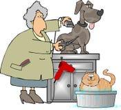groomer宠物 库存例证