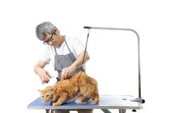 Groomer. The Asian pet groomer standing on the white background Stock Photography