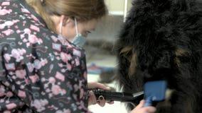 Groomer del cane con il lavoro degli strumenti archivi video