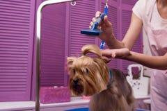 Groomer, der Kamm beim Pflegen des Hundes im Haustiersalon hält Stockbild
