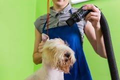 Groomer gebruikt een droogkap om hond te drogen Stock Fotografie