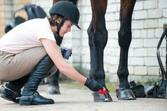 Groomer horsewoman taking care of chestnut horse hoof. Outdoors multicolored horizontal image royalty free stock photo