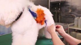 Groomer macht eine Zeichnung auf einem Hund stock footage
