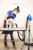 The groomer uses a hair dryer to dry dog. Royalty Free Stock Photo