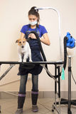 The groomer uses a hair dryer to dry dog. Royalty Free Stock Photography
