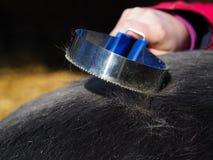 grooming fotografia de stock