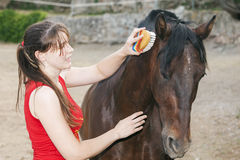 Grooming. Young woman grooming her horse Stock Photo