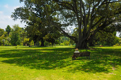 Grooming and beauty of the parks Royalty Free Stock Photography