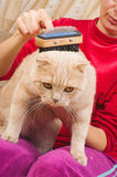 Grooming Cat Brush Royalty Free Stock Photo