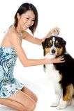 Grooming Dog Royalty Free Stock Image