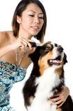 Grooming Dog Stock Photography