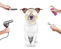 Grooming dog Stock Images