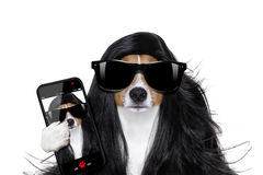 Grooming dog at the hairdressers Stock Photos