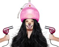 Grooming dog at the hairdressers Royalty Free Stock Photo