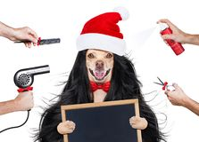 Grooming dog at the hairdressers stock photography