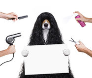 Grooming dog at the hairdressers Royalty Free Stock Photography