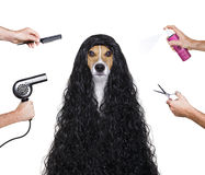 Grooming dog at the hairdressers Stock Image
